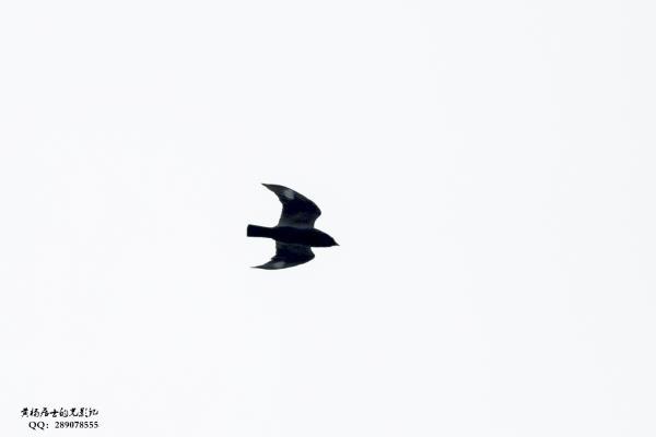 图说|省常中观鸟小记之2020.05.31