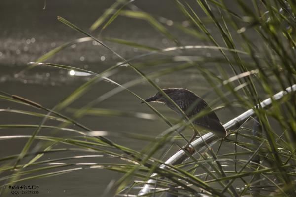 图说|省常中观鸟小记之2020.06.07